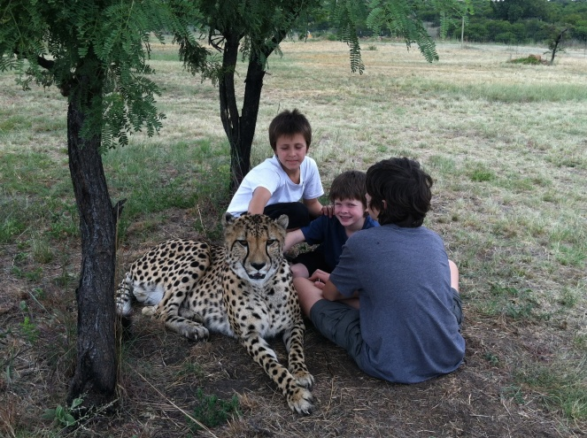 Cheetah and boys