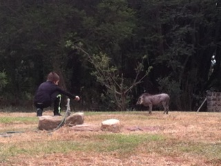 trent warthog