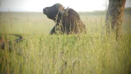 wbuffalo