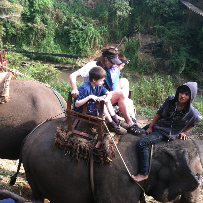 elepant Thailand